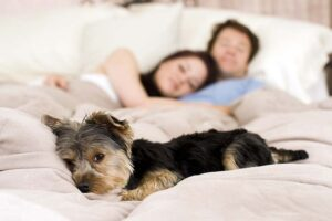 Couple in bed with their dog