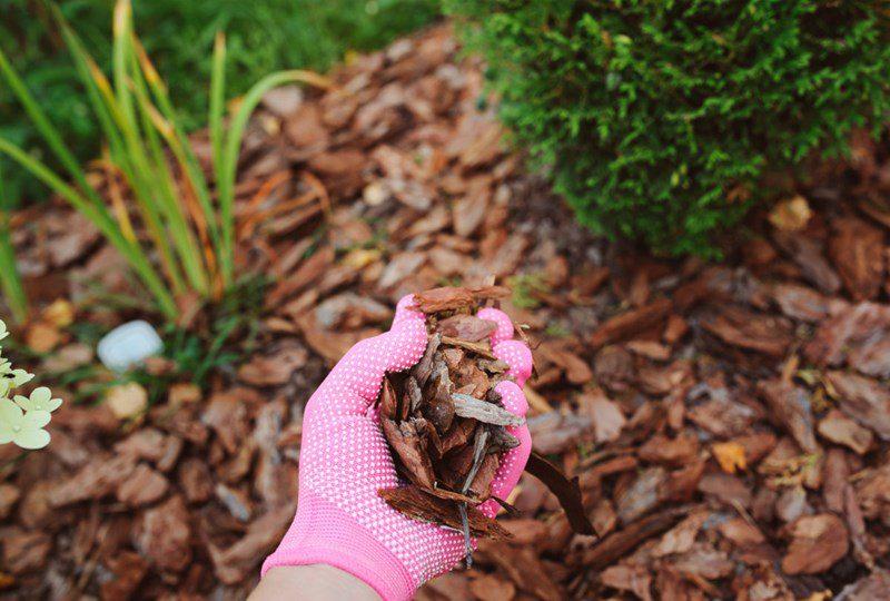 landscaping tips, photo of dark mulch
